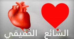 صورة شكل قلب الانسان , ركز في ابداع الخالق