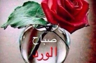صورة ورد مكتوب عليها صباح الخير , صبح علي حبيبك بورده