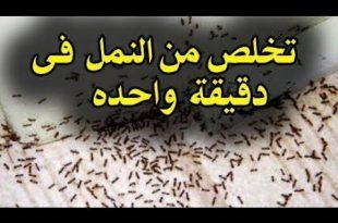 صورة كيفية القضاء على النمل , وصفه هتخلصك من النمل