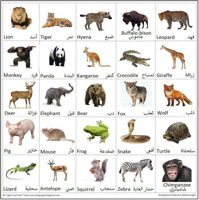 صورة اسماء حيوانات 16 , تعرفوا ع اهم اسماء الحيوانات 12267 1