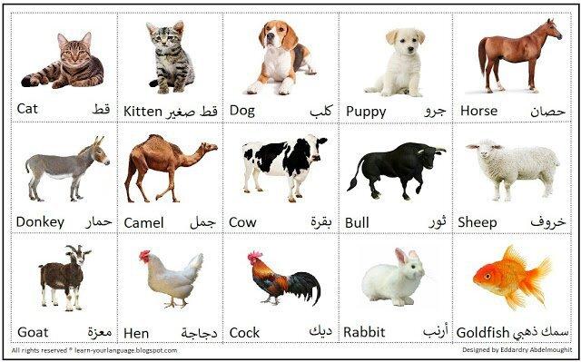 صورة اسماء حيوانات 16 , تعرفوا ع اهم اسماء الحيوانات 12267